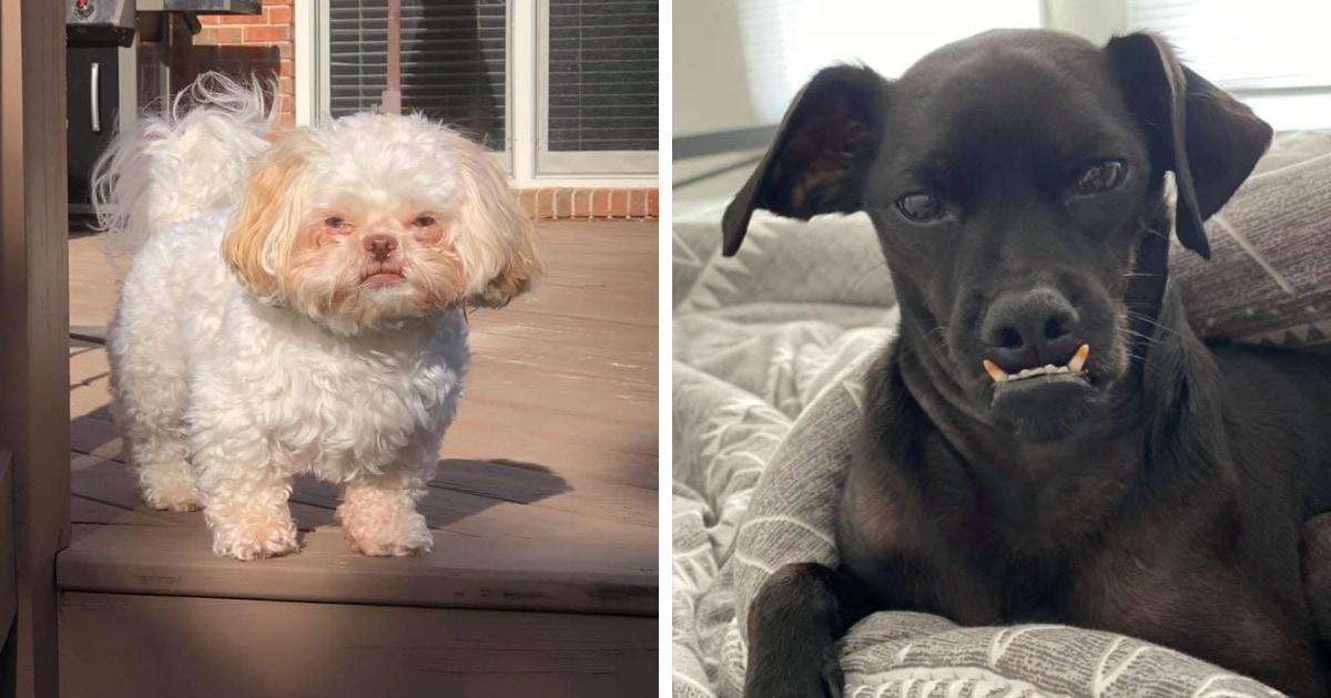 15 снимков собак, которые хотели пристыдить взглядом своих хозяев, но заставили краснеть весь интернет