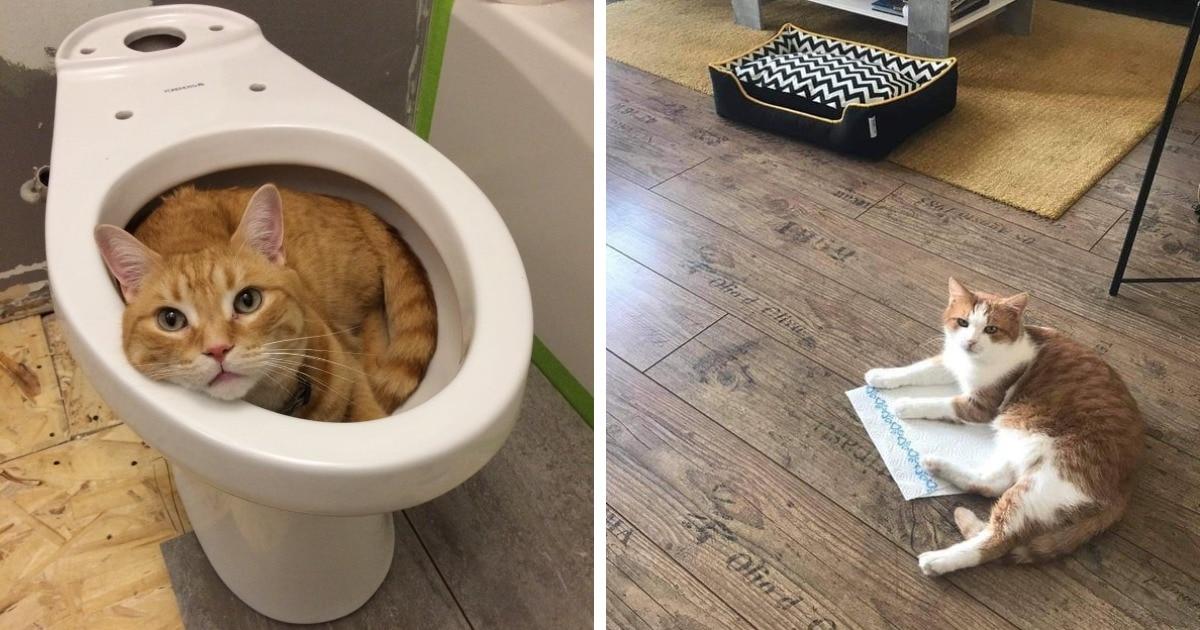 20 фотографий вредных котов, которые будут спать где угодно, но не на специально купленных для них лежанках