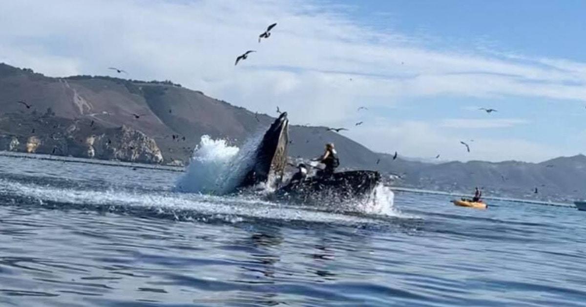 Подруги наблюдали за китами с воды и чуть не попали одному из них в рот. И видео их встречи — лучший ужастик