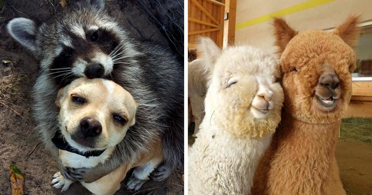 15 умилительных фотографий дружбы животных, глядя на которые сложно сдержать мимими
