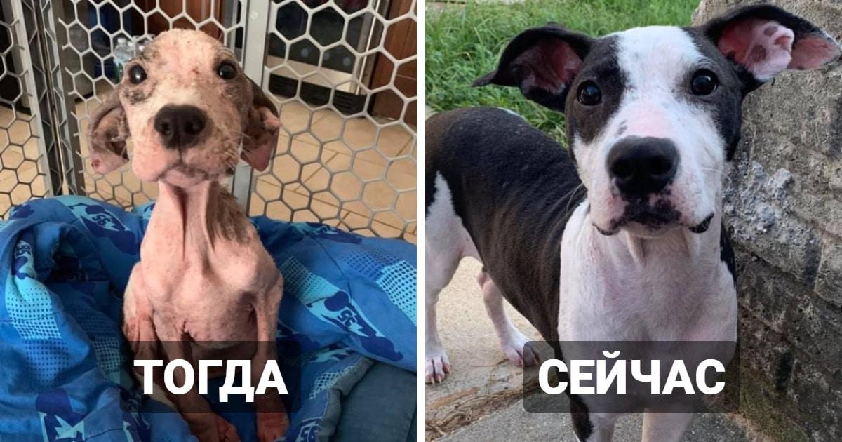 Пользователи сети устроили челлендж, показав, как изменились их собаки. И эти перемены просто поражают!