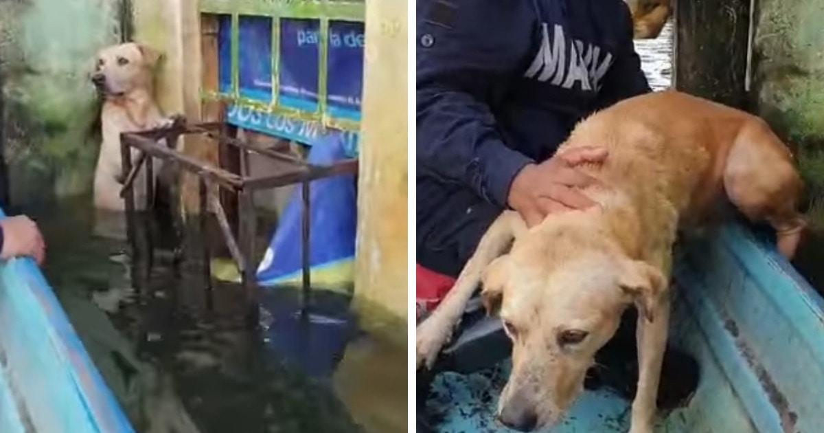 В Мексике спасли пса, стоявшего на задних лапах, чтобы не утонуть. И его благодарная морда растрогает любого