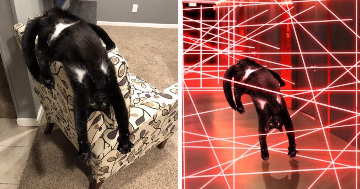 Кот со смешными подмышками изогнулся в странной позе и попал в фотошоп-битву. Юмористы постарались на славу