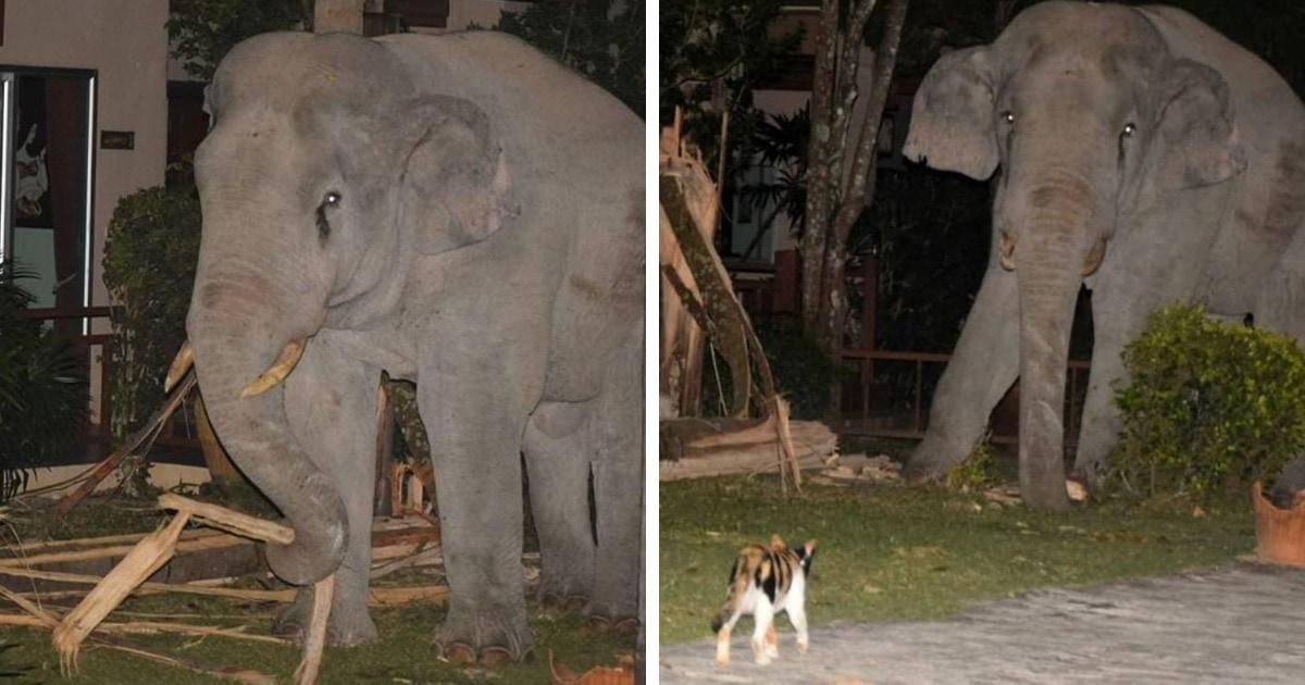 В Таиланде слон залез к людям во двор, но встретил там отпор. Охранник оказался крайне суров и пушист