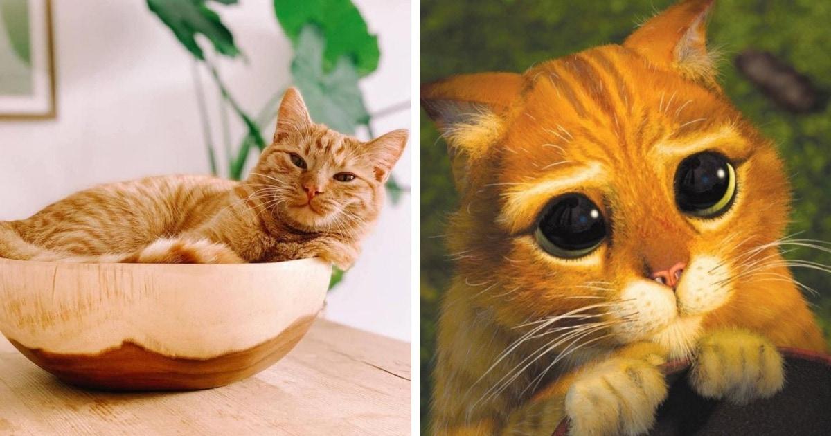 Кот По По может очаровать любого, лишь бы получить желаемое. И ещё бы, ведь он овладел трюком Кота в сапогах!