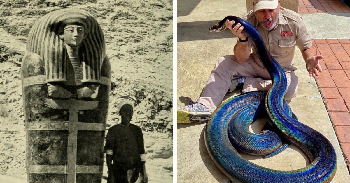 17 фотографий предметов, животных и явлений, чьи размеры удивят даже опытных почемучек