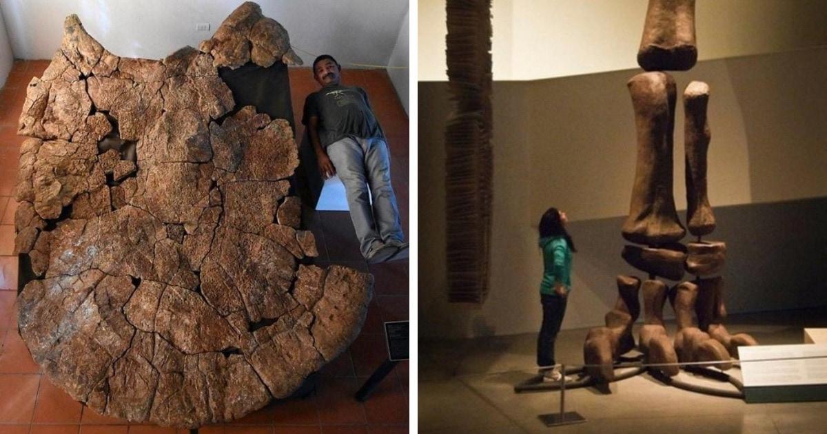 15 фотографий удивительных окаменелостей — приветов из прошлого, от которых захватывает дух