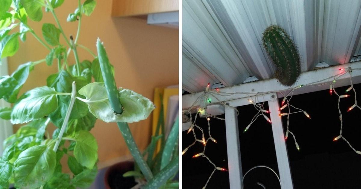 20 комнатных растений, которые установили свои порядки в доме и ведут себя так, как им заблагорассудится