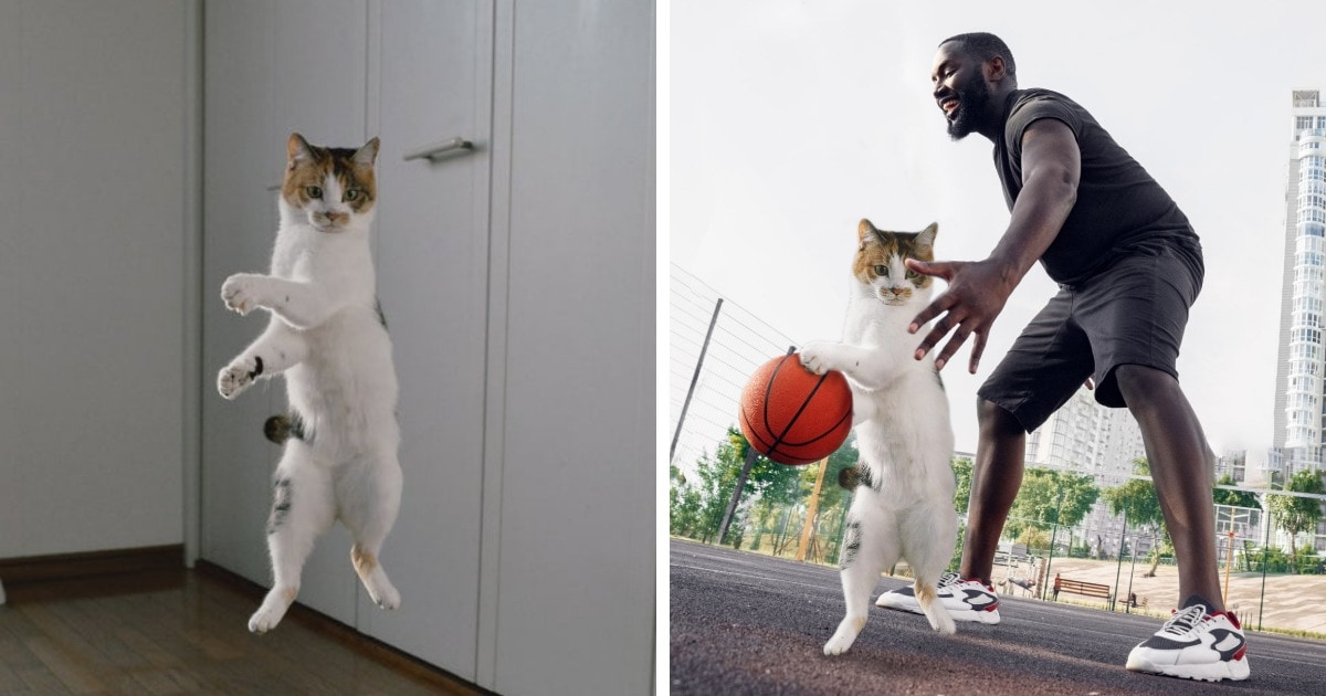 Кота засняли в высоком прыжке, и интернет-мастера тут же превратили его полёт в эффектный фотошоп-баттл