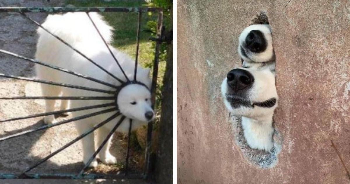 18 случаев, когда собаки вели себя как самые настоящие дурачки. Но от этого хочется любить их ещё сильнее