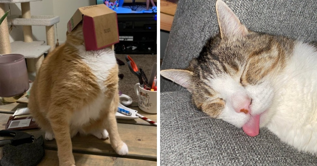 17 фотографий непосредственных котов, которые не стесняются выглядеть дурачками и смешить всех вокруг
