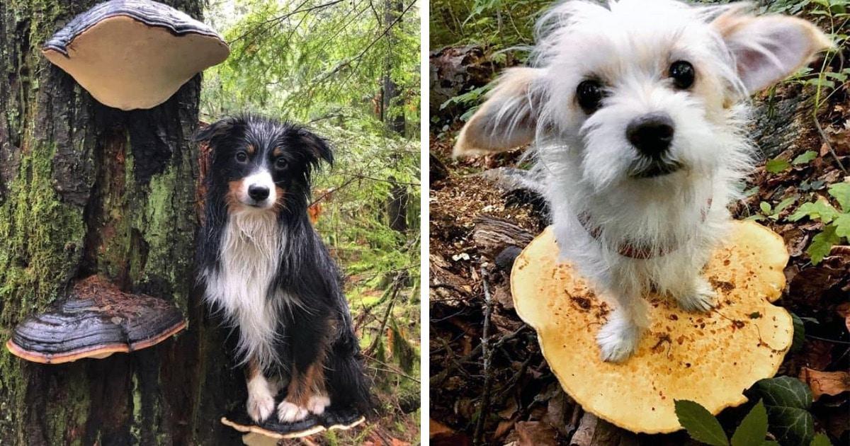 В сети появился новый тренд — фотографировать пёсиков на грибах. В прямом смысле! И вот фото 12 любимцев