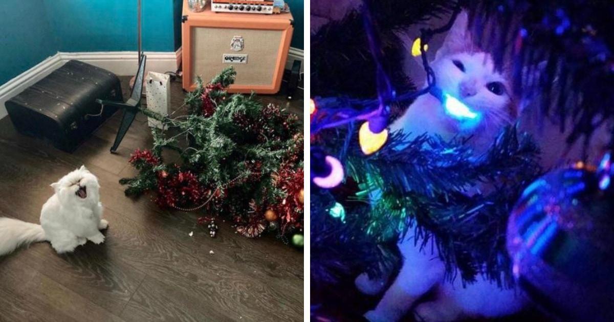17 провальных ситуаций, когда люди украшали дом, чтобы поймать праздничное настроение, но коты были против