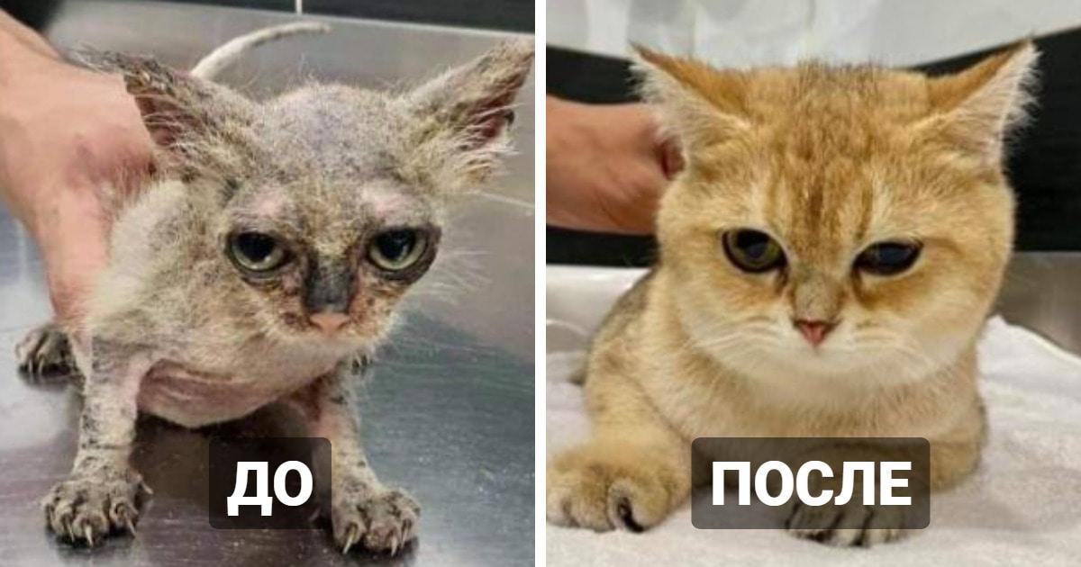 17 фотографий котов, которые выглядели очень жалкими, но попали в хорошие руки и изменились до неузнаваемости