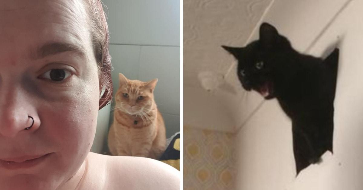 16 случаев, когда люди обнаруживали у себя дома котов. И всё бы ничего, но это были вообще не их коты!