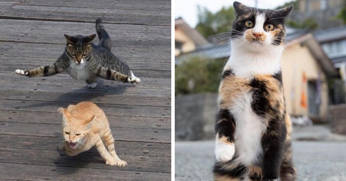 25 крутых фотографий от японского фотографа, который снимает уличных котов, раскрывая их невероятную харизму