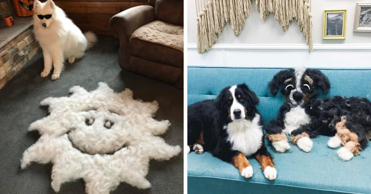 Хозяева устроили флешмоб и показали, сколько шерсти можно счесать с их обычных на первый взгляд собак