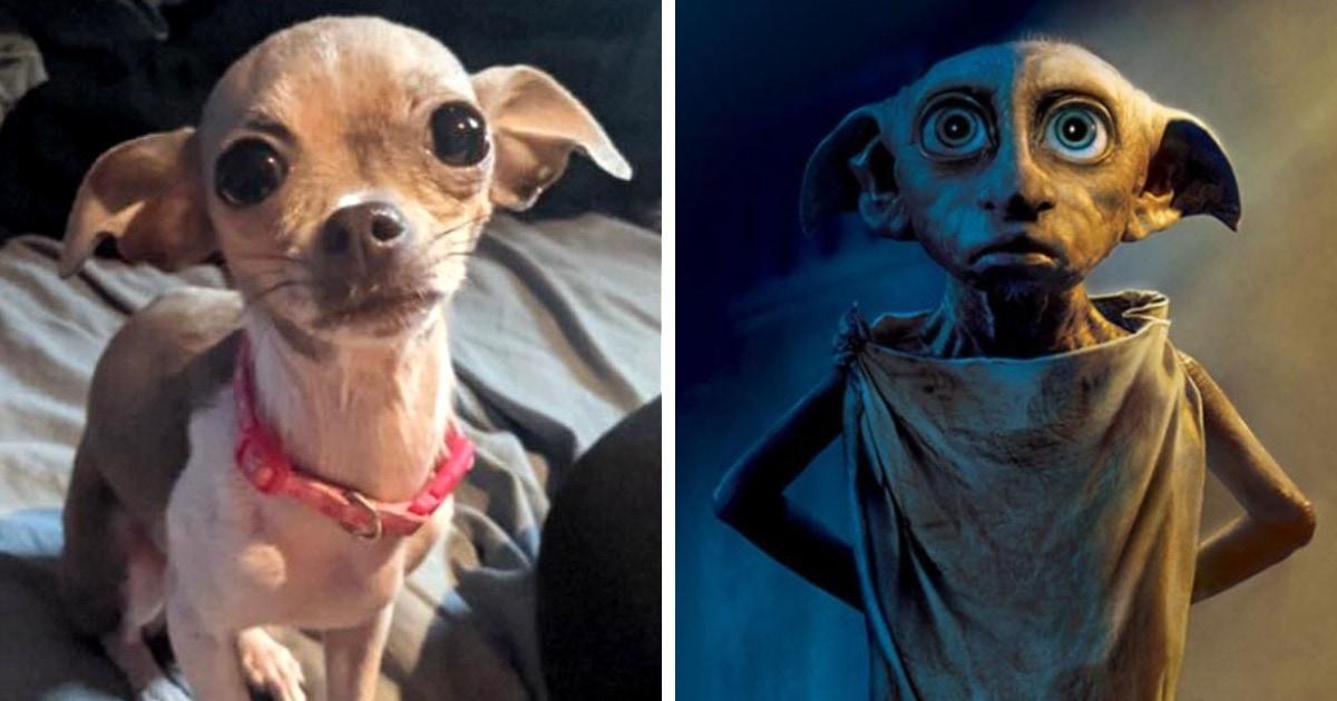 Пользователи сети решили показать, на кого похожи их собаки. В ход пошли мемы, кино и другие животные