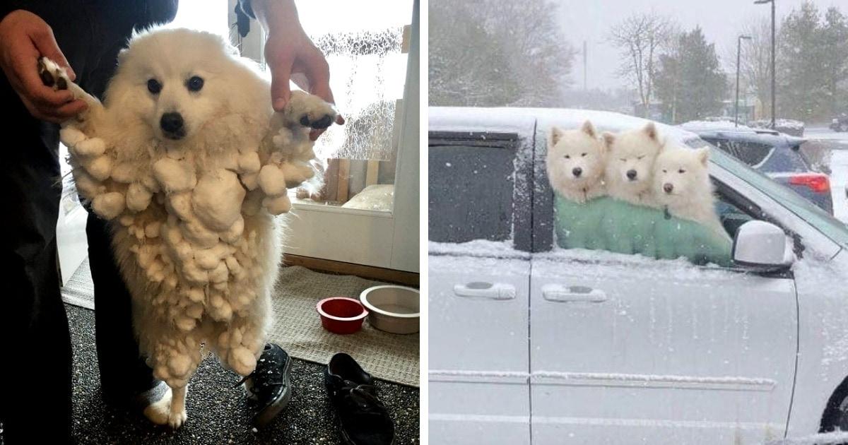 16 очаровательных фотографий собак, которые радуются снегу как никто другой