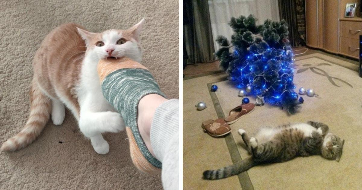 17 случаев, когда коты совсем обнаглели и потеряли последние остатки стыда и совести
