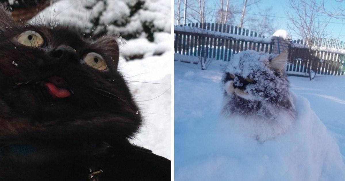 15 снимков домашних котиков, которых вывели из тёпленьких квартир на прогулку в заснеженный внешний мир