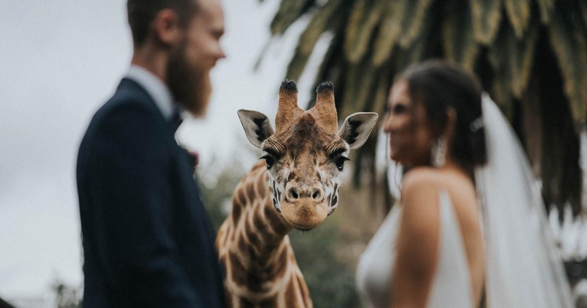 20 снимков-победителей конкурса свадебных фотографий, которые докажут, что в 2020-м было место любви и счастью