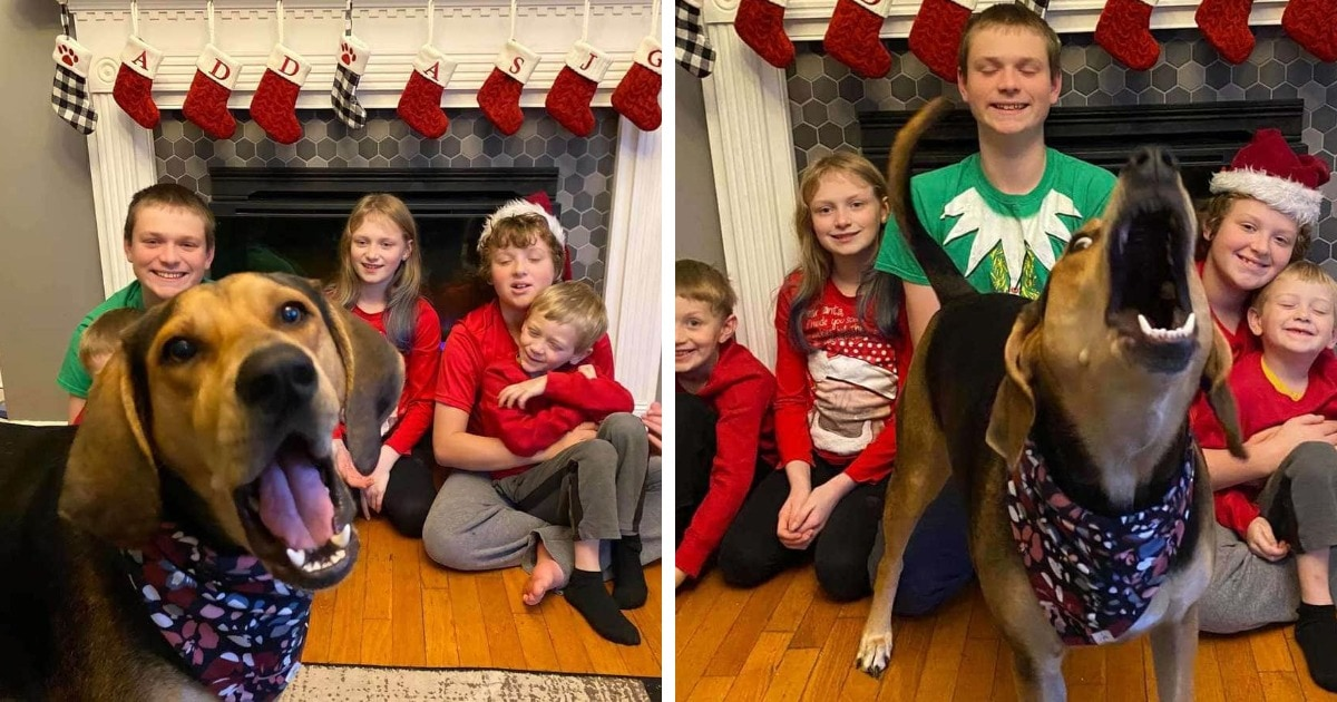 Семья устроила рождественскую фотосессию, но их собака решила испортить каждый снимок. И так вышло даже лучше!