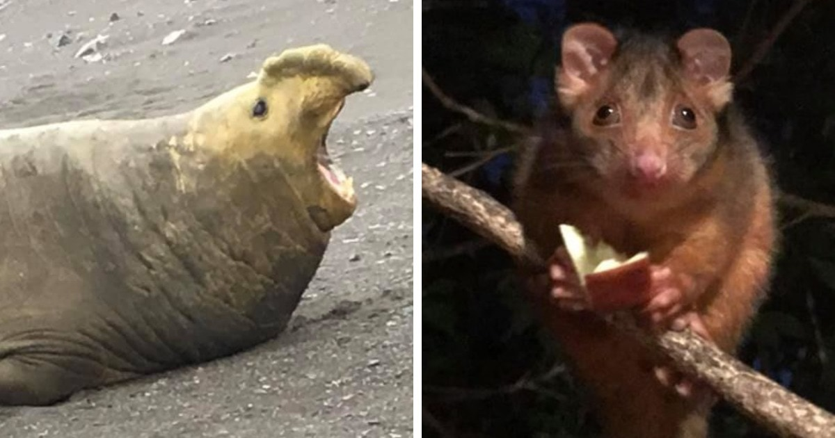 16 смешных и неловких снимков диких животных, которые не отличились фотогеничностью
