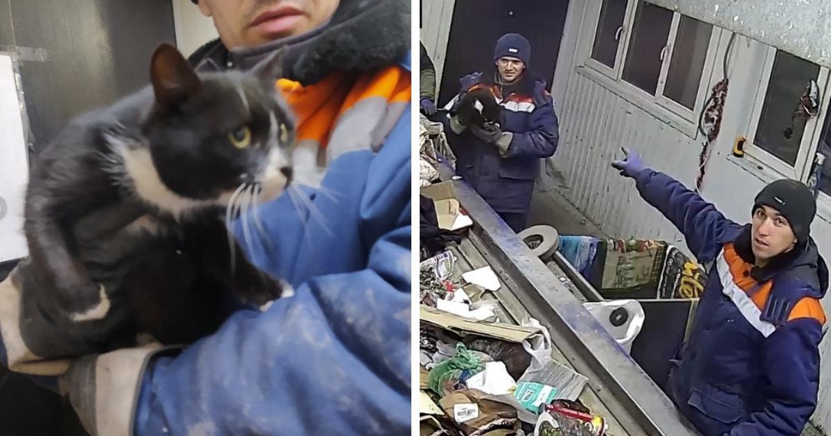 В Ульяновске в мусоре нашли кота. Его спасли, и это стало началом его карьеры замминистра области