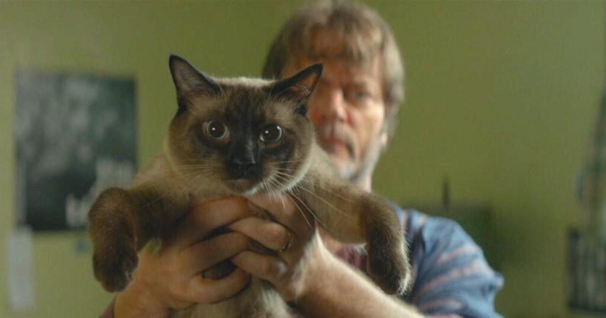 В Твиттере отвечают на вопрос «Есть ли кот в этом фильме?», находя хвостатых там, где о них мало кто помнит