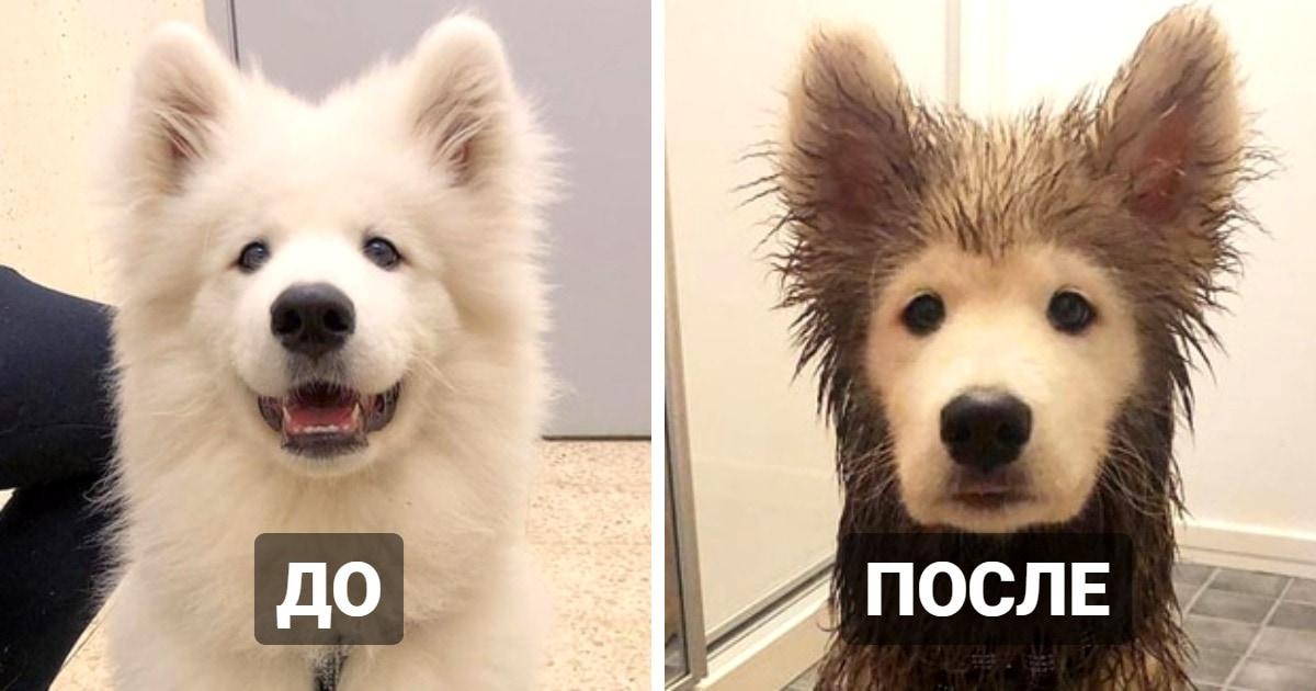 15 примеров того, что бывает с собаками после прогулки, или почему не стоит позволять им играть в грязи