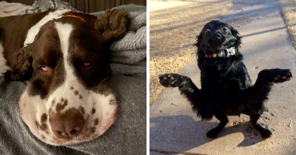 19 фотографий собак, которые выглядят настоящими дурачками и никогда не оставят своих хозяев без веселья