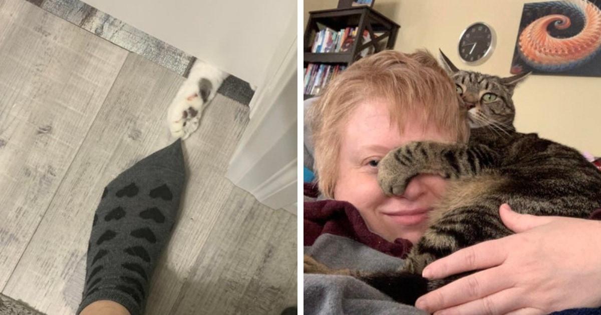 17 случаев, когда коты доказали, что личное пространство людей для них пустой звук