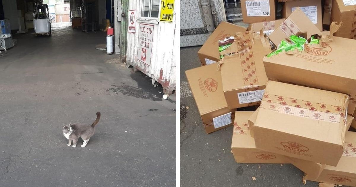 Украинский кот тайно проник в транспортный контейнер и был 3 недели в пути без воды. И то, как он выжил — чудо