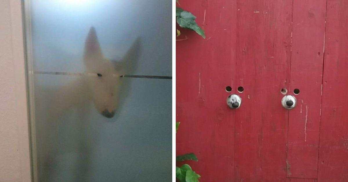 17 любопытных пёсиков, которые ни за какую косточку не позволят своему хозяину побыть наедине с самим собой