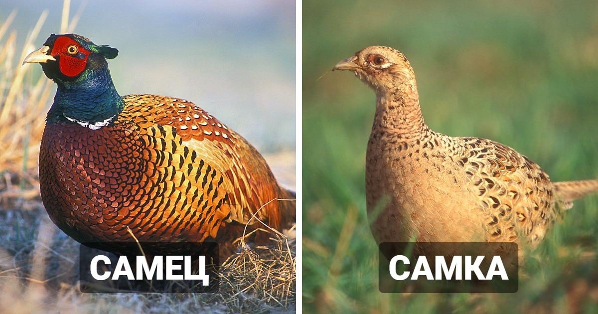12 видов животных, чьи различия между самцами и самками могут заставить усомниться в их родстве