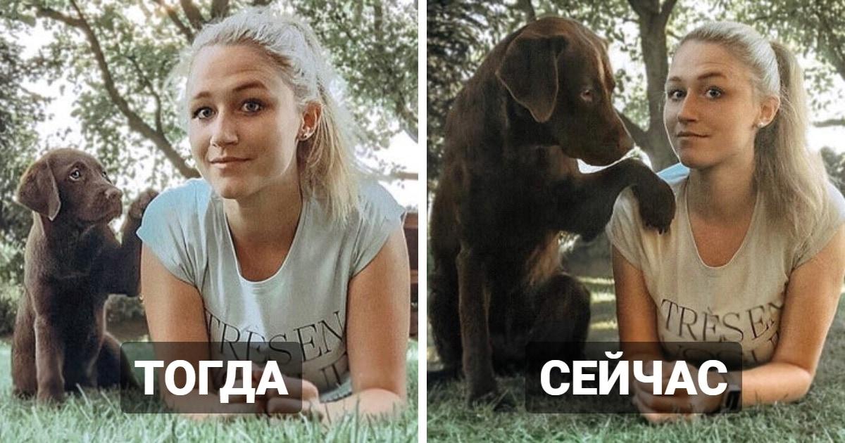 17 фотографий собак до и после того, как они выросли и из милых щеночков превратились в здоровяков