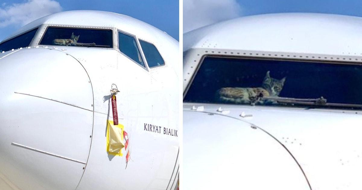 Котика на две недели забыли в пустом самолёте. Но этот красавец остался цел и даже оставил о себе напоминание