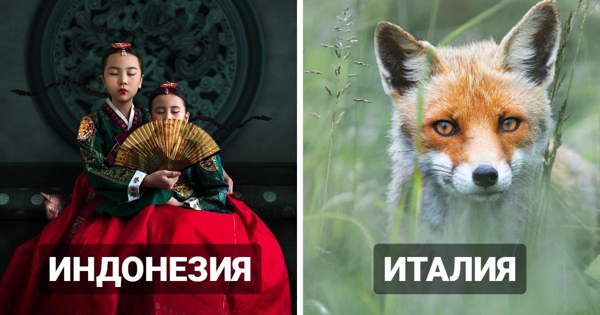 20 ярких фотографий с конкурса Sony, ставшие лучшими в разных странах в 2021 году