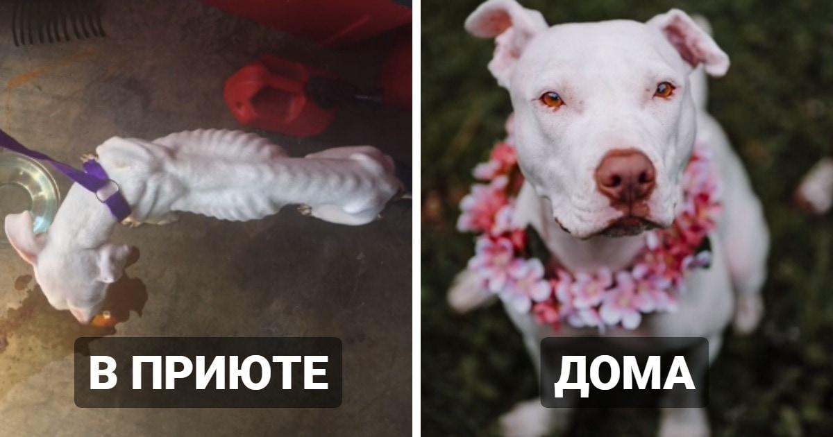 18 трогательных примеров того, как изменились собаки, когда после приюта обрели настоящий дом