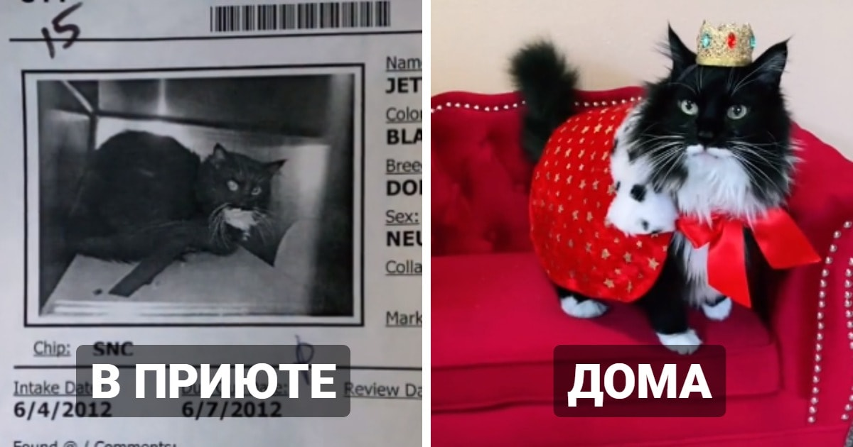 17 трогательных фото, которые показывают, как изменились коты, когда из приютов попали к любящим хозяевам