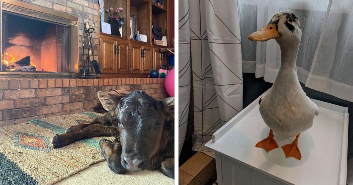 В Техас пришли морозы, и люди укрывают дома всех животин. И их фото в домашней обстановке согревают душу