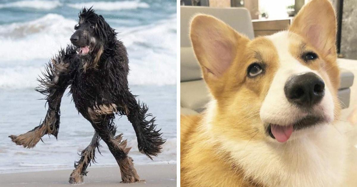18 фотографий милых и дурашливых собак, у которых явно сбились какие-то настройки, но от этого только смешнее