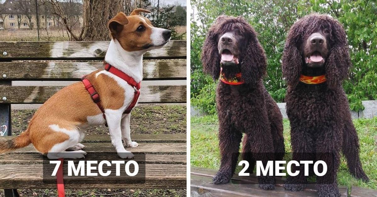 Исследователи назвали 20 пород собак, которые оказались самыми красивыми согласно золотому сечению