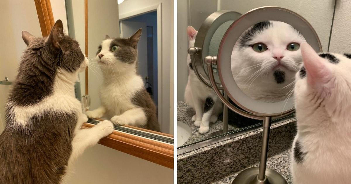 15 случаев, когда животные встретились с собственным отражением и очень мило и забавно на это отреагировали