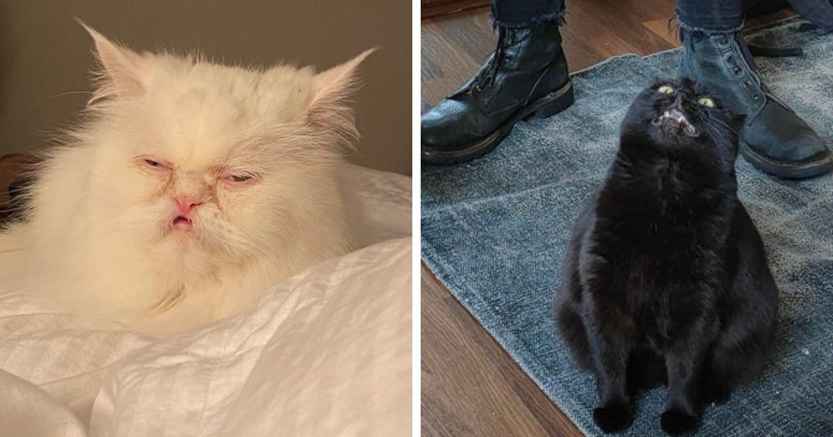 17 неудачных фотографий котиков, увидев которые, эти пушистики сказали бы только одно: «Удоли»