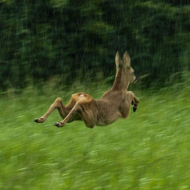 16 неудачных снимков представителей фауны, на которых эти животины демонстрируют всю свою дурашливость