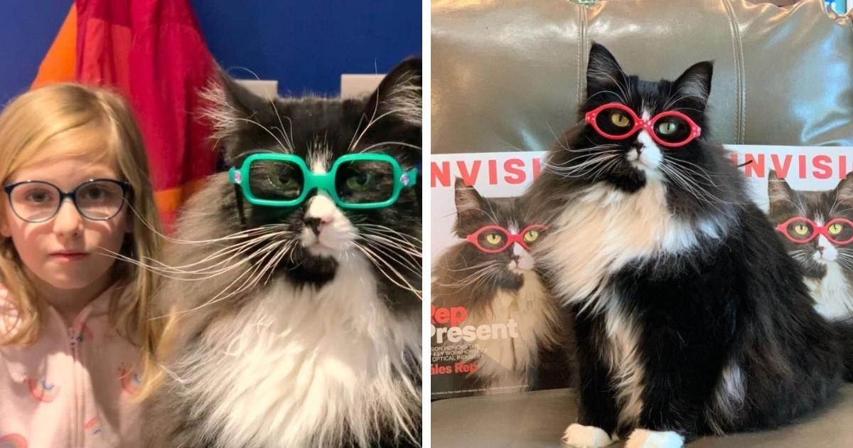 Оптика наняла кошку-модель, чтобы дети не стеснялись очков. Глядя на неё, очки захотят и люди с единичкой