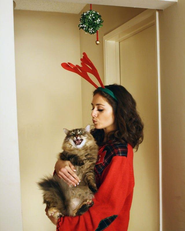 16 недовольных котов, которые категорически против обнимашек и сообщают об этом всеми возможными способами