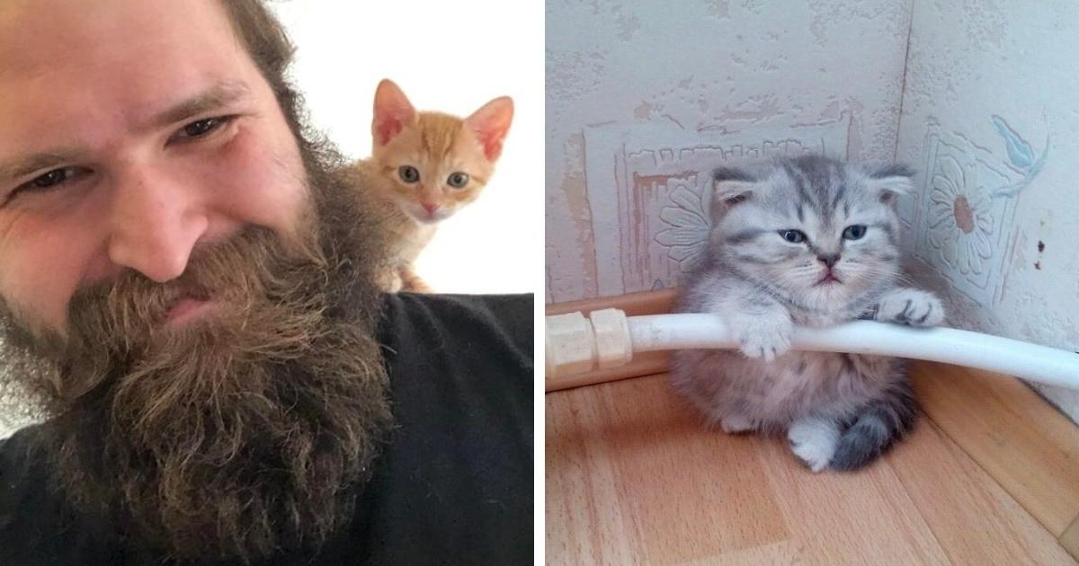 15 фотографий котят, которые оказались такими крошечными, что это кажется чем-то противозаконным
